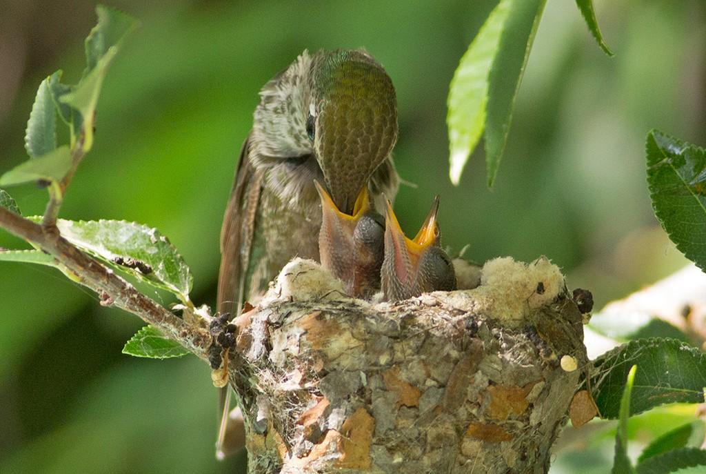 Картинка яиц колибри