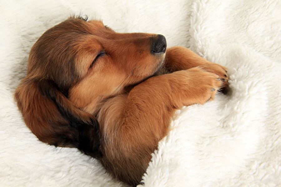 27 dogs that sleep in your bed — because you can!