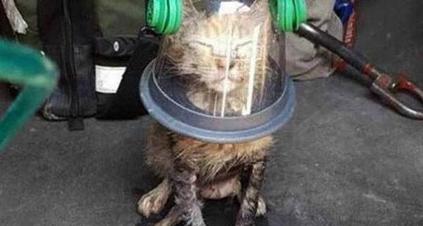 Пожарные с помощью специальной маски спасли кошку, которая была без сознания