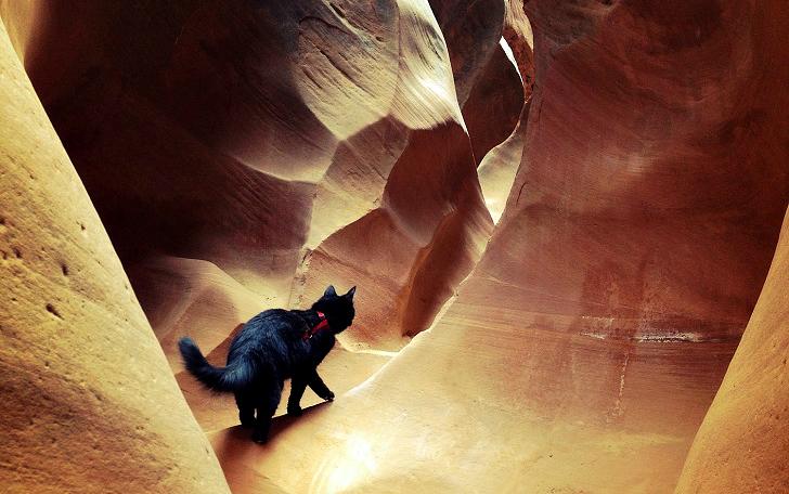 Альпинисточка моя: первый в мире котик-скалолаз