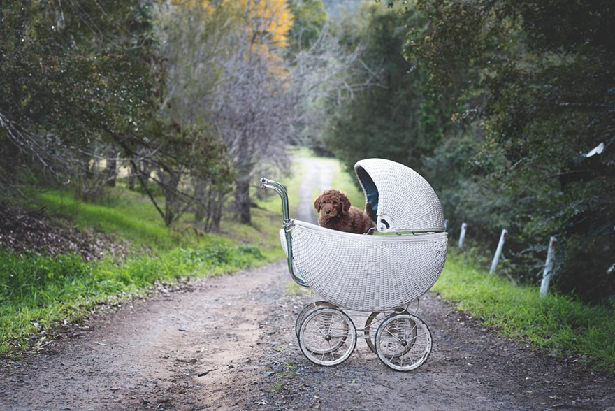 """This pair of tired of them asking about the children, and made his dog a """"newborn photo shoot"""""""