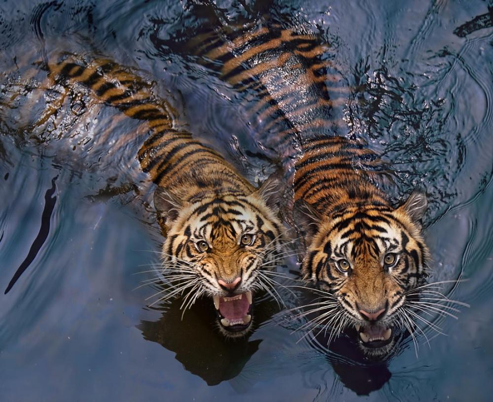 Животные живые открытки