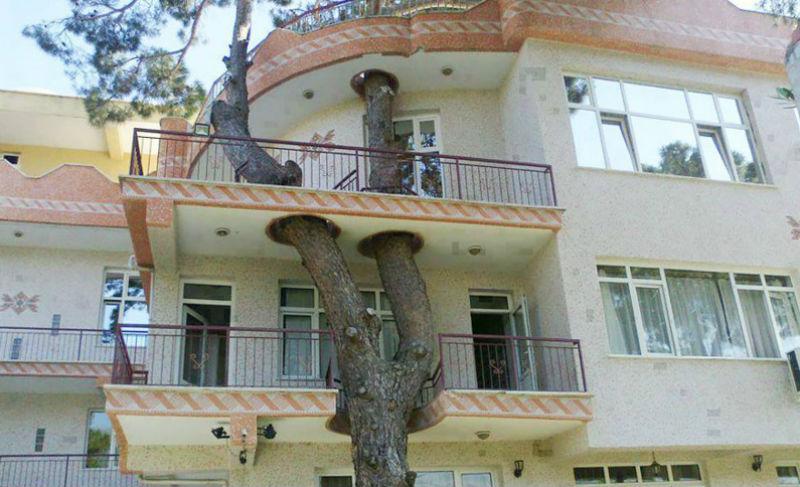 architecturearoundtrees04-800x600