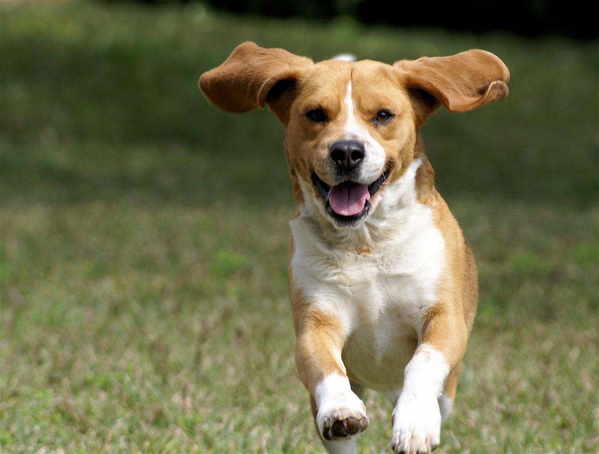Dog Breeds Academy