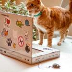 Ноутбук для котиков — то, чего вам не хватает
