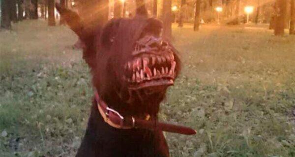 Намордник, который превратит самого доброго пса в кровожадного монстра