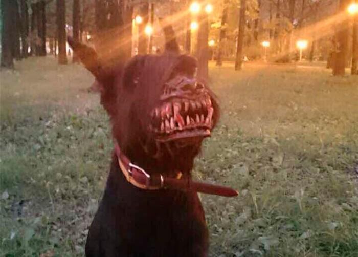 Намордник, который превратит самого доброго пса в кровожадного монстра фото