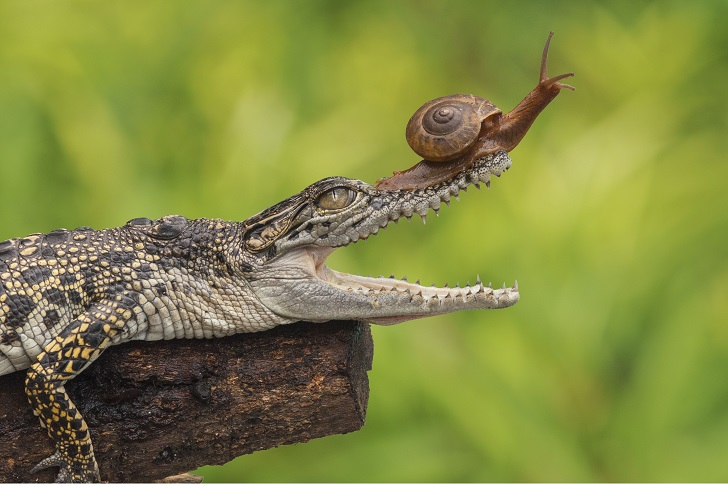 This intrepid snail you've ever seen