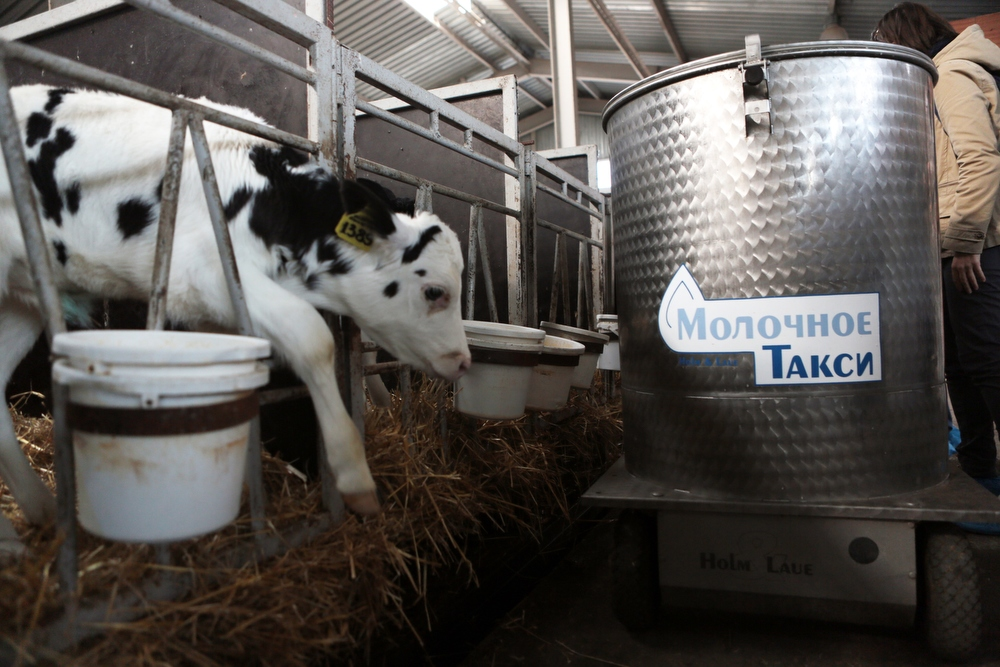 Порно ферма молока — img 14