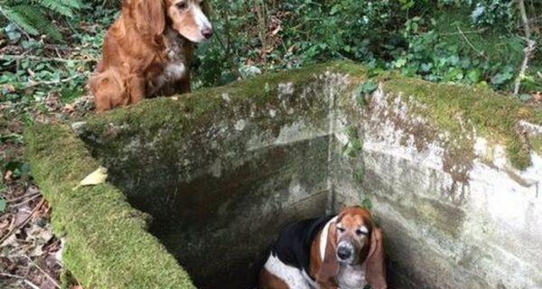 Собака неделю просидела возле своего попавшего в яму друга — пока не прибыла помощь из фейсбука