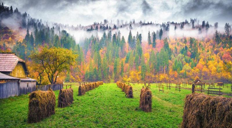 autumn10-800x500