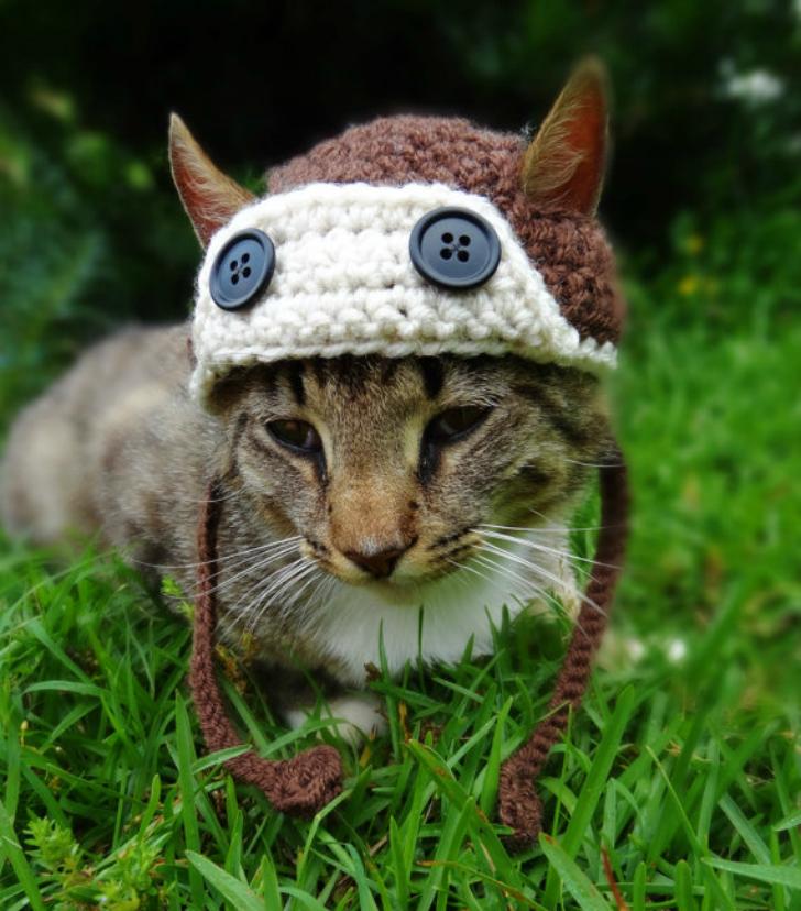 комнатные картинки шапок животных сила