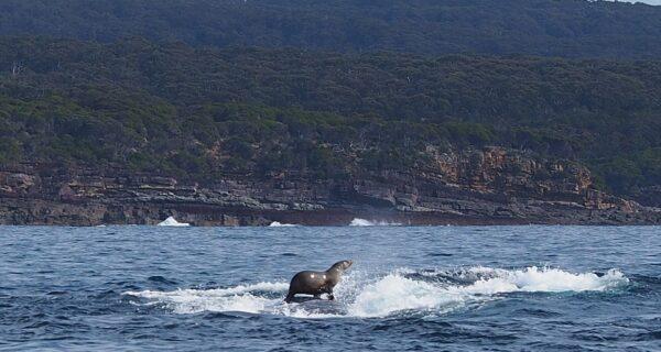 Такого вы еще не видели: тюлень катается наките!
