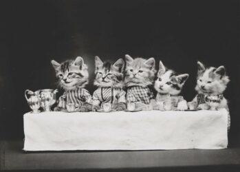 В начале XX века интернета еще не было, но все уже угорали по котикам
