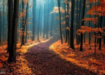 AutumnForests01