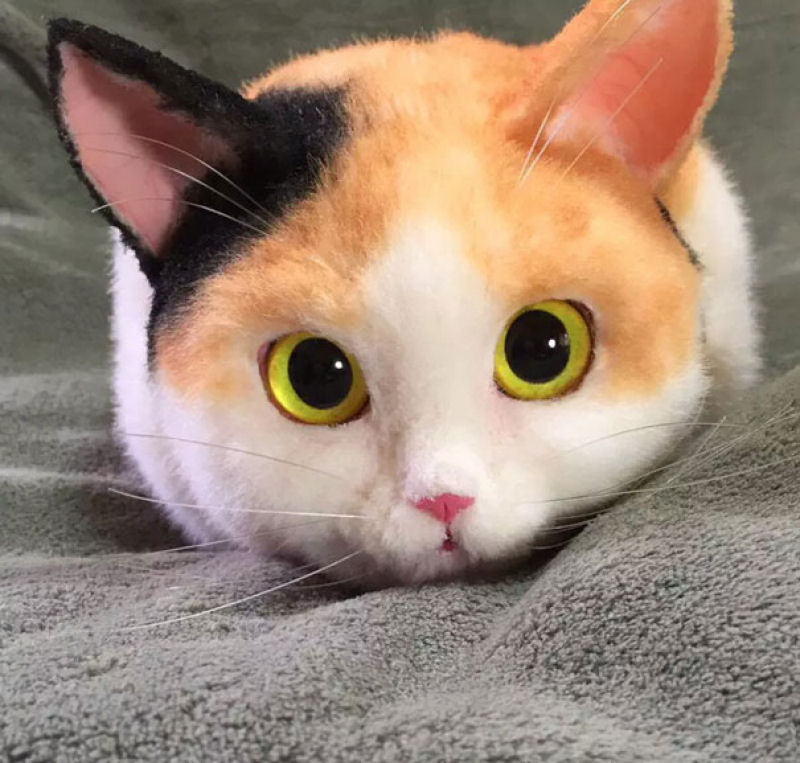 Картинки в виде кота, открытки для