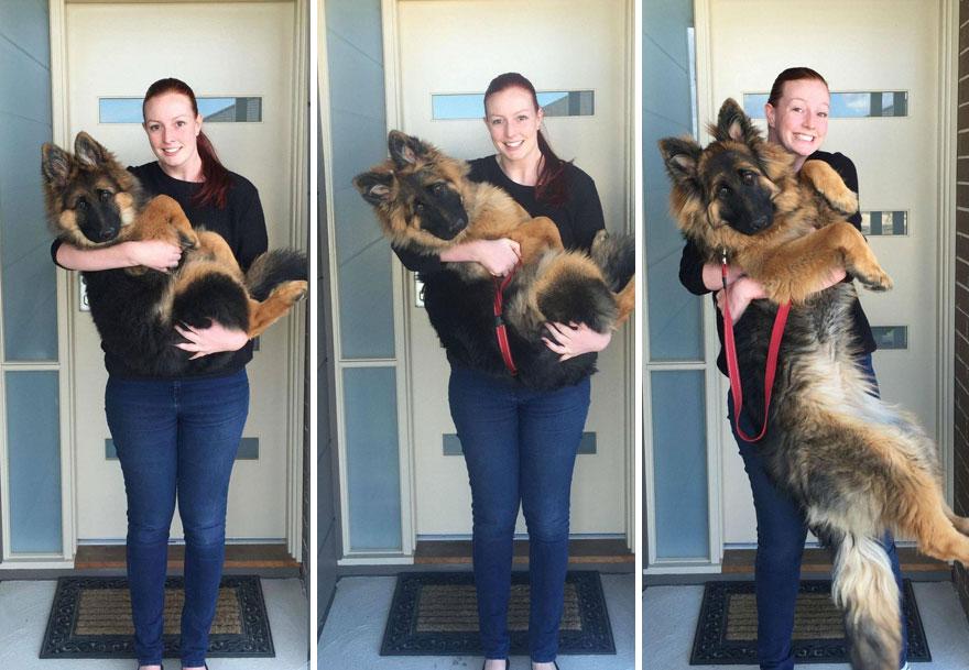 Пара задокументировала, как быстро вырос их пес