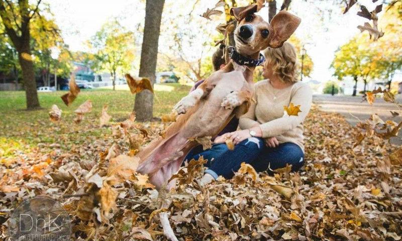 dachshund01-800x533