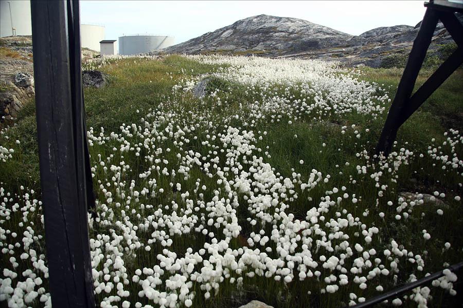 edgeoftheworld25 Гренландия на яхте: 2 недели на краю света