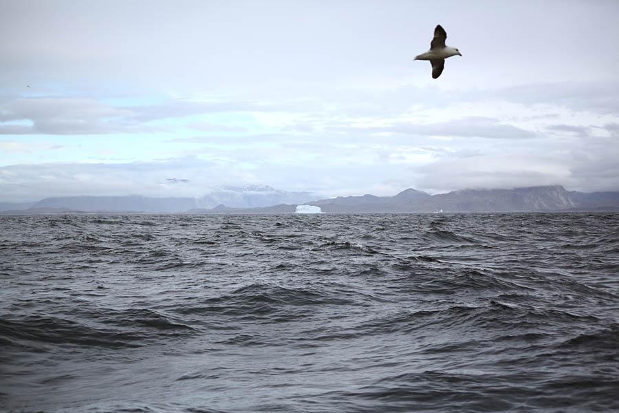 edgeoftheworld46 Гренландия на яхте: 2 недели на краю света