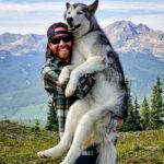 Гибрид собаки и волка Локи и его приключения