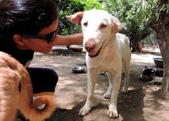 Найденная на улице умирающая собака полностью изменилась всего за 2 месяца!