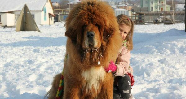 Снежные львы: из Тибета в Казахстан