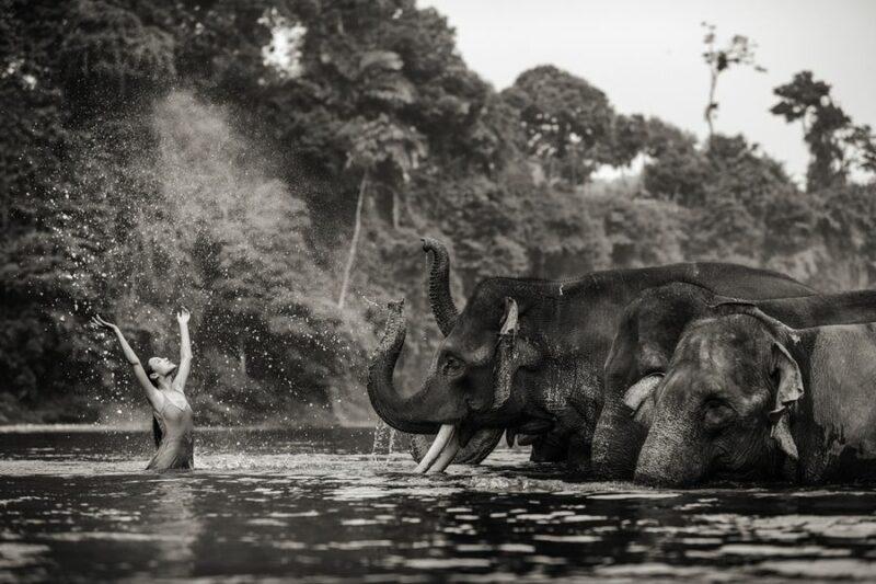 Удивительные портреты азиатских моделей и знаменитостей с дикими животными