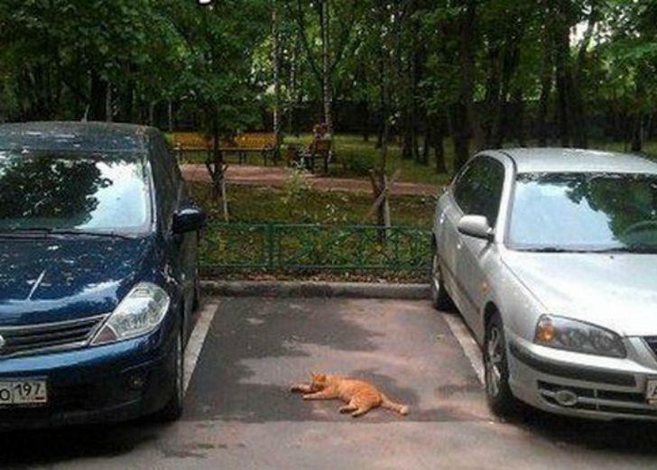 заняли парковочное место во дворе