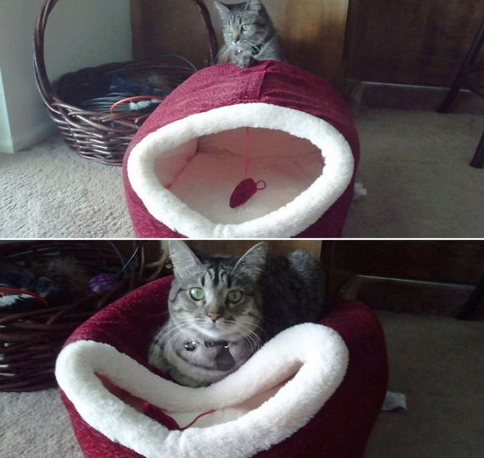15 cats who don't care about your logic