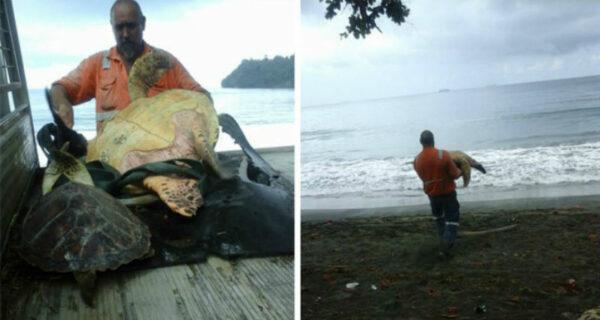Эти мужчины покупают морских черепах, чтобы выпустить их обратно вморе