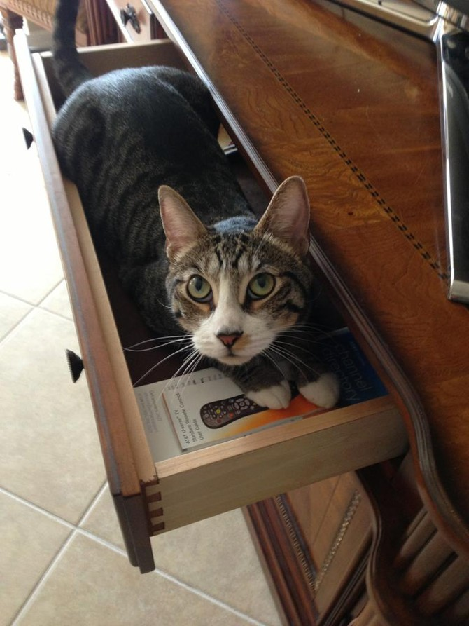 15 places we did not expect to see the cat