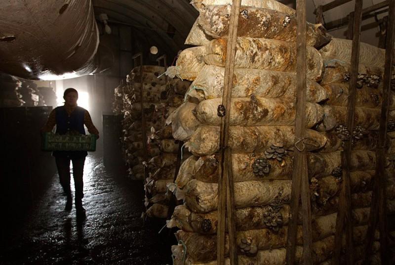 Недалеко от деревни Минойты в Гродненской области до 1997 года располагалась секретная военная база, где хранились ракеты с ядерными боеголовками. После расформирования воинской части белорусский предприниматель взял освободившиеся помещения в аренду и открыл ферму по выращиванию грибов вешенок.