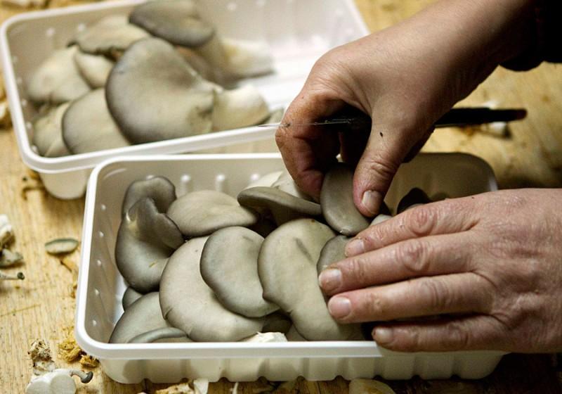 Сортировка грибов.