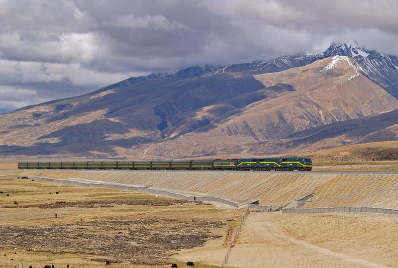 Участки Цинхай-Тибетской дороги, проложенные на насыпи по поверхности земли, огорожены на всем их протяжении, а для перехода мигрирующих животных регулярно проложены специальные тоннели и сооружены мосты.