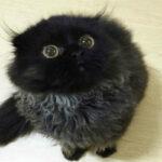 Котик Гимо, который всегда вшоке