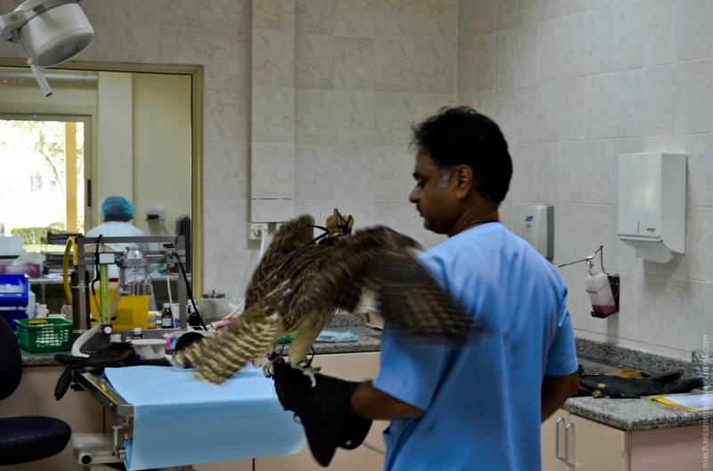 Попав в больницу, ветеринары осматривают птицу и проводят стандартный набор общих процедур.