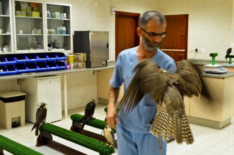 Затем наркоз снимается и птица оживает через несколько минут. После наркоза птица слегка неадекватная, поэтому ей нужно находится с человеком некоторое время.