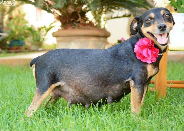 Да это просто самая фотогеничная собака-мама на свете