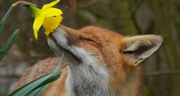 15 очаровательных животных, которые наслаждаются ароматом цветов