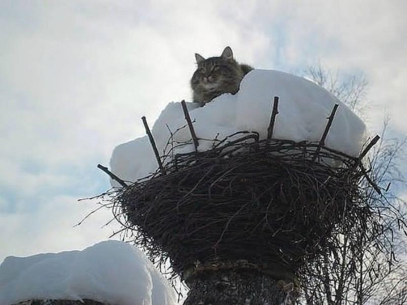 картинки коты прилетели была шведский стол