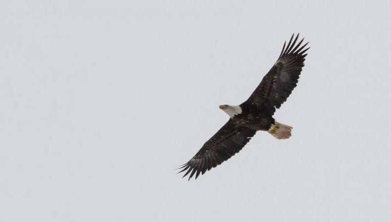 eagleslove05-800x532