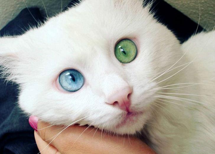 самый красивый кот инета