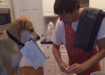 собака помогака мини