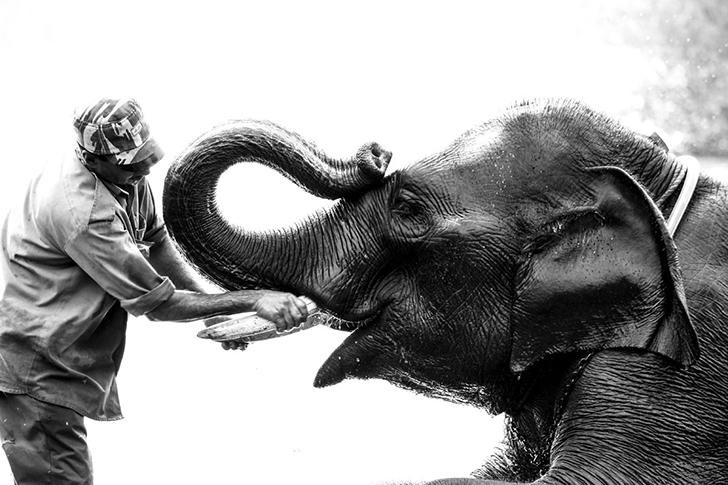 big_eleph
