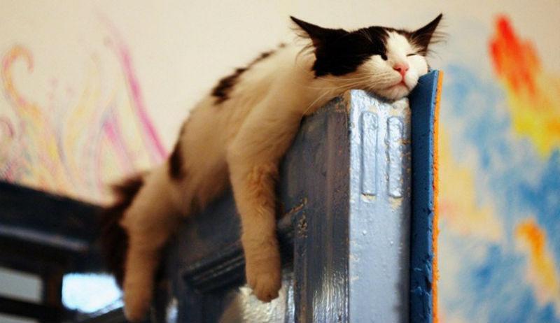 sleepingcats26-1