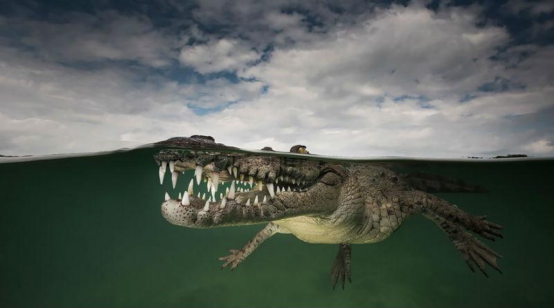 split-shot-half-submerged-over-under-water-photography-8__880