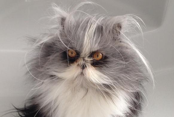 Кот заглавная