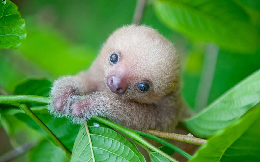 ленивцы заглавная