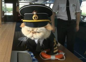 миниатюра кот капитан 728
